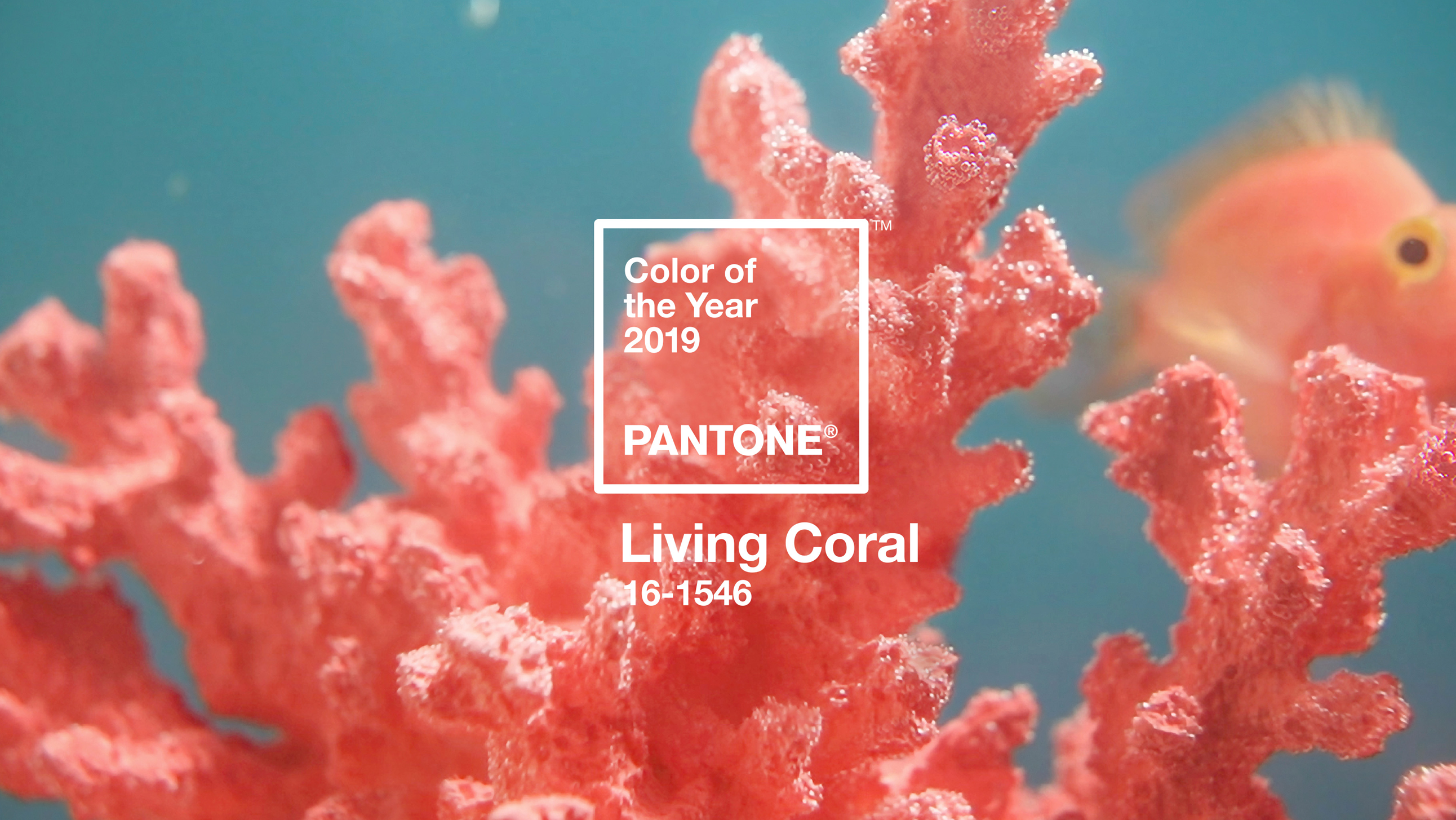 blog-header-LivingCoral